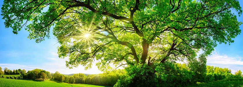 環境への取り組み|三菱UFJフィナンシャル・グループ